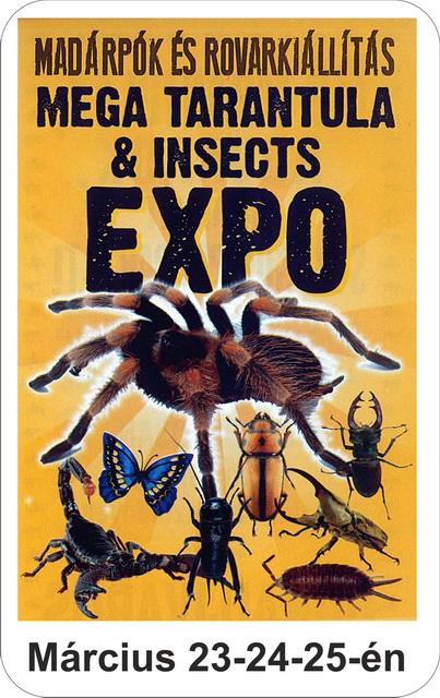 Madárpók és rovarkiállítás
