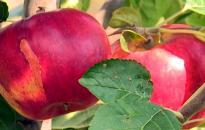 Kemény évet zártak a kertészetek