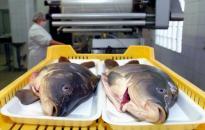 Jövőre olcsóbb lesz a hal