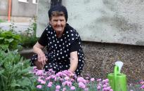 Miklánné Jolika és a Görbe utcai rózsák