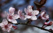 Csak beköszönt végre a tavasz?