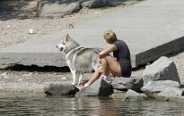 Kutyahelyzet a kutyamelegben
