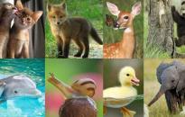 Harmóniában a természettel és az állatvilággal
