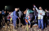 Januárban több mint hétszáz migránst fogtak el a magyar-szerb határon