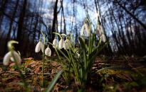 Bekacsint a tavasz