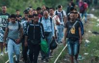A belga közegészségügy az illegális bevándorlók között terjedő betegségekre figyelmeztet