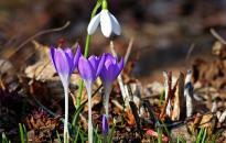 Időjárás: tavaszias nyitány – aztán némi lehűlés