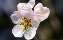 Időjárás: kellemes tavaszi napok – a végén lehűléssel