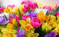 Boldog anyáknak boldog anyák napját!