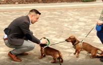 Kutya chip-olvasót állítottak rendszerbe a Városházán