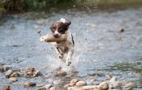Kiskedvenceink is megszomjaznak a nagy melegben. Ha sétálni megyünk velük, mindig legyen nálunk friss víz!