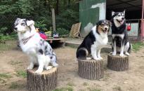 Duna Dog Center Alapítvány: a cél a felelős állattartással kapcsolatos hiteles információk megosztása