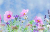 Hang- és fényjáték helyettesíti idén a hagyományos brüsszeli virágszőnyeget