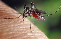 Újabb szúnyoggyérítés lesz városunkban ma este