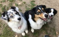 Kutyatartási etikett – hogyan használjuk a zárt kutyafuttatókat?