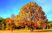 Aranyló ősz közelít