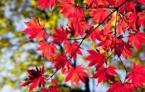 Még a szebbik orcáját fordítja felénk az ősz