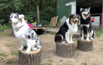 Városi kutyatartási etikett 4. – ingoványos terepen
