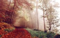 Változékony és hűvös őszi nap