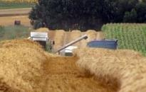 Befejezték az aratást