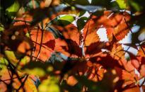 Csípős hideggel jön az ősz - ez vár ránk a héten