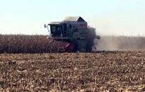 Már aratják a kukoricát is