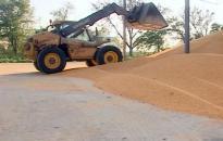 Megkezdődött a kukorica betakarítása