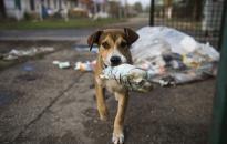 Akik nyolc éve mentik az utcán kóborló állatokat