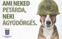 Tipptár a háziállatok szilveszteri védelmére