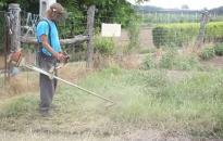 Már lehet készülni a parlagfű elleni védekezésre
