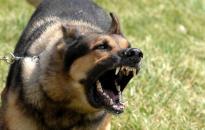 Befogták a rendőrökre támadó, meglőtt kutyát