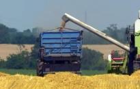 Nehézségek a gabona értékesítésében