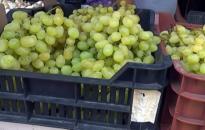 Itt a szőlőszezon