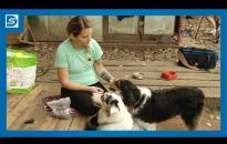 """Embedded thumbnail for Városi kutyatartási etikett 3. – a """"póráz nélküli"""" foglalkozások"""