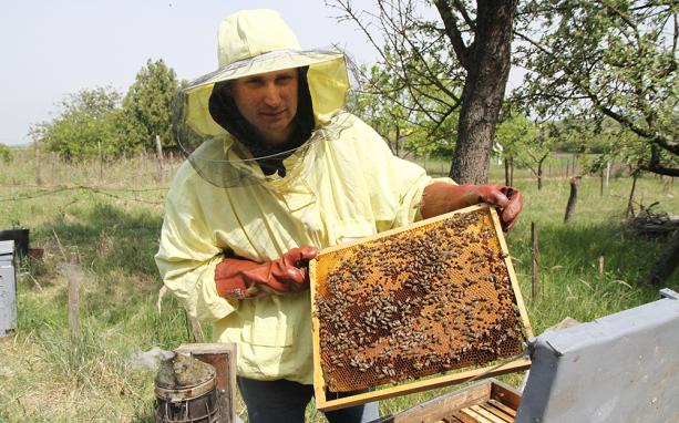 a méhek pénzt keresnek az interneten)