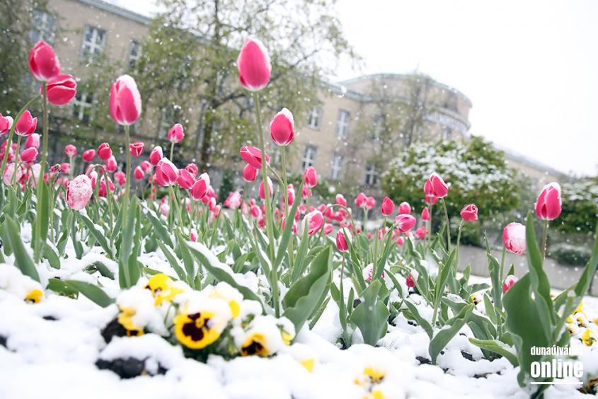 Hull a pelyhes áprilisi hó...  - fotó: Sándor Judit