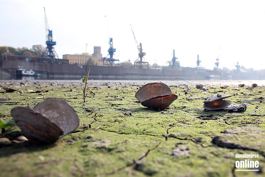 A Duna vízszintje városunknál - fotó: Sándor Judit