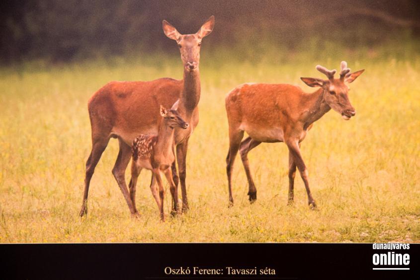 Mezőföld Fotókiállítás MMK - fotó: Ónodi Zoltán