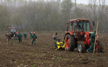 Erdősítés a Schalbert-szigeten - fotó: