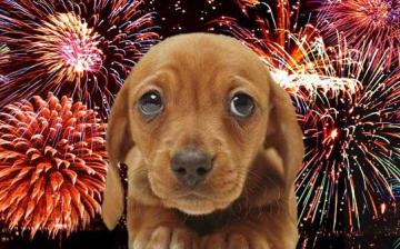 Sokkhatást okoz az állatoknál a tűzijáték