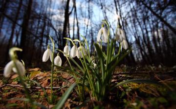 Tavaszias időnk lesz