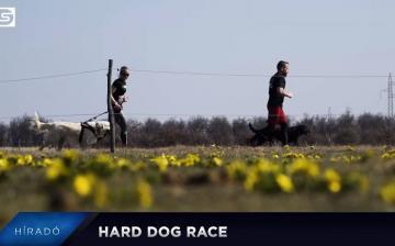 DS Híradó: Hard Dog Race Dunaújvárosban