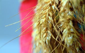DSTV | Új kenyér ünnepe