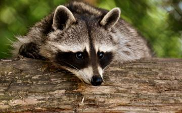 A Nemzeti Állatvédelmi Program megújítását sürgetik