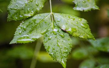 Komor, borongós szombat, gyenge esőkkel
