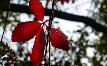 Időjárás: visszatér a szép csöndes, napos ősz