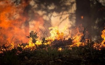 Díjban részesült a magyar erdőtűz-megelőzési kezdeményezés