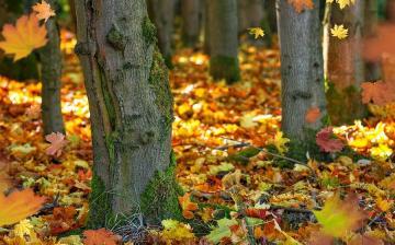 Folytatódik az enyhe ősz – de már felhővel, csapadékkal