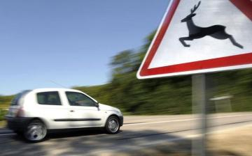 Közlekedés: vigyázat, vadveszély!