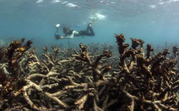 Helyi intézkedésekkel is segíthető a korallok fennmaradása